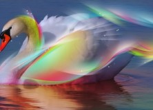 Rainbow Swans grow with Mountains support